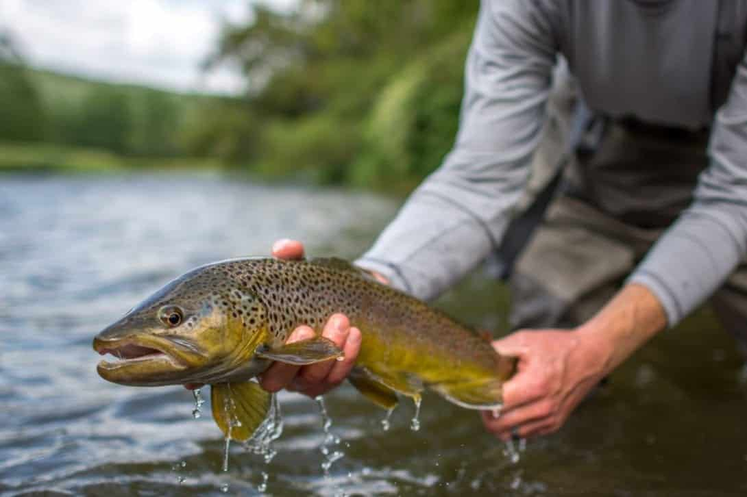 fly fishing, trout handling, how to handle a trout, beginners guide to handling trout, how to take photos of fish