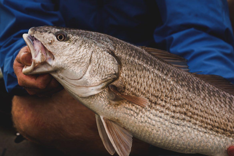 Trout, Bass, Redfish Fly Fishing Flies Clouser Minnow Yellow /& Brown 6 flies
